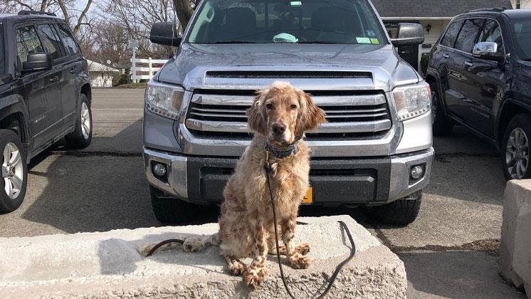 YourEveryDayK9 14 Day Off-Leash Dog Training Program, Grand