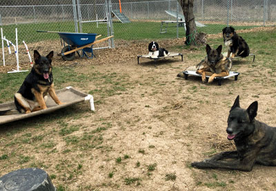 YourEveryDayK9, LLC - Dog Behavior Modification Training, Buffalo-Niagara, WNY