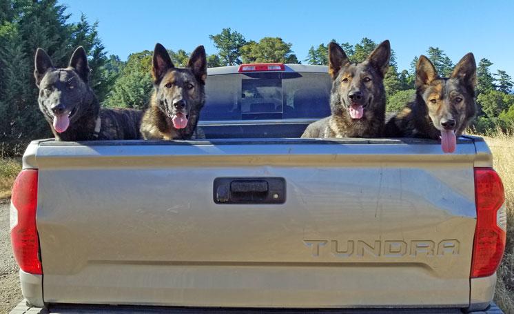 YourEveryDayK9, LLC Dog Behavior Training Services For Western New York